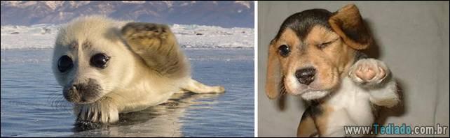 focas-sao-cachorros-oceanos-06