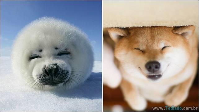 focas-sao-cachorros-oceanos-07