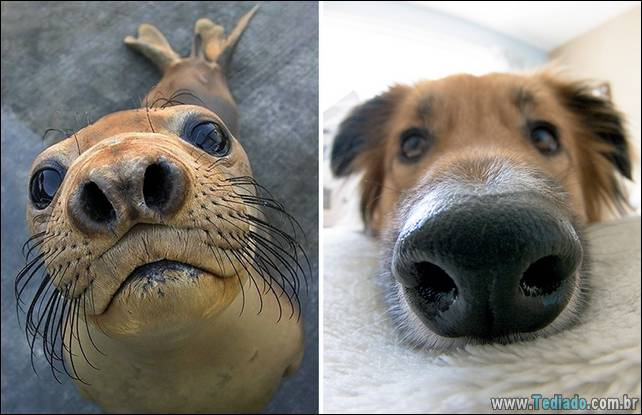 focas-sao-cachorros-oceanos-09