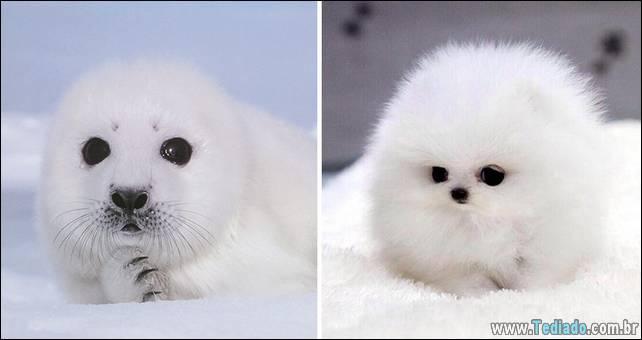 focas-sao-cachorros-oceanos-12