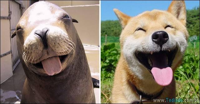 focas-sao-cachorros-oceanos-13