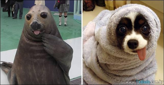 focas-sao-cachorros-oceanos-15