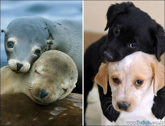 focas-sao-cachorros-oceanos-16