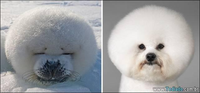 focas-sao-cachorros-oceanos-17