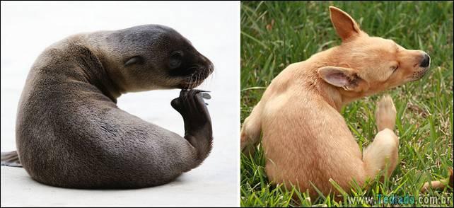 focas-sao-cachorros-oceanos-18