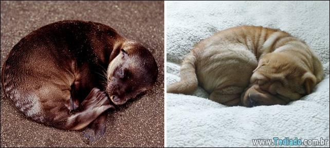 focas-sao-cachorros-oceanos-19