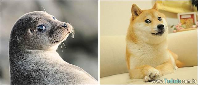 focas-sao-cachorros-oceanos-21