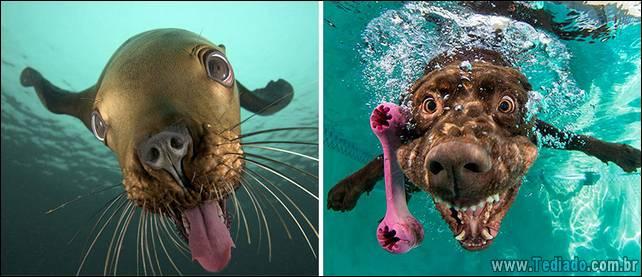 focas-sao-cachorros-oceanos-22