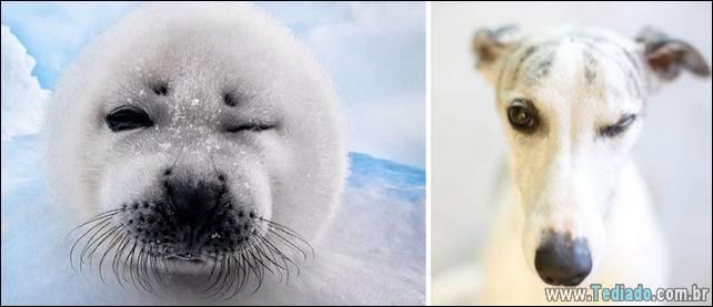 focas-sao-cachorros-oceanos-23