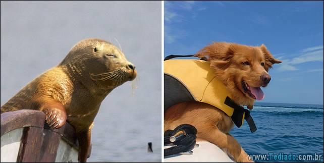 focas-sao-cachorros-oceanos-25