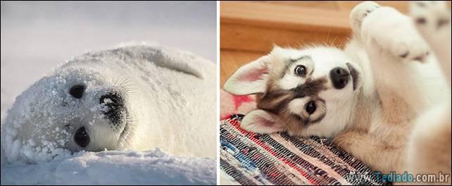 focas-sao-cachorros-oceanos-27