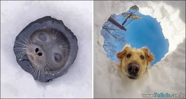 focas-sao-cachorros-oceanos-29