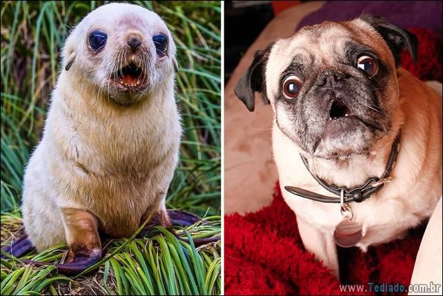 focas-sao-cachorros-oceanos-30