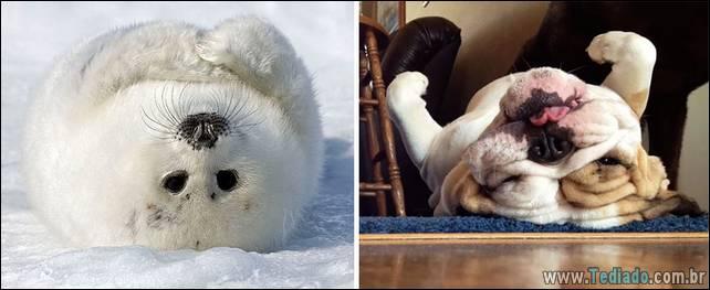 focas-sao-cachorros-oceanos-31