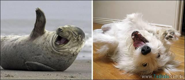 focas-sao-cachorros-oceanos-32