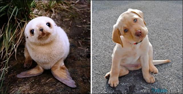 focas-sao-cachorros-oceanos-34