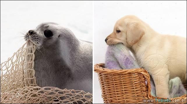 focas-sao-cachorros-oceanos-35