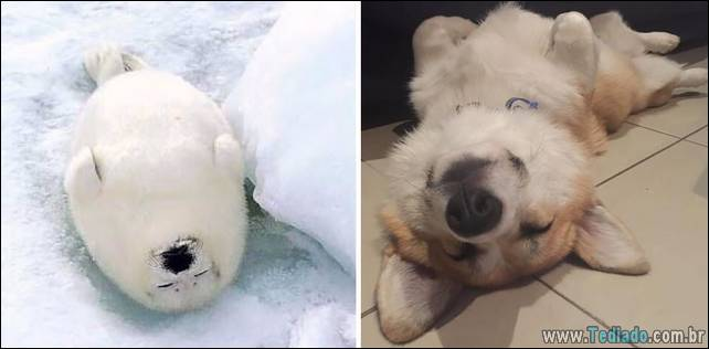 focas-sao-cachorros-oceanos-39