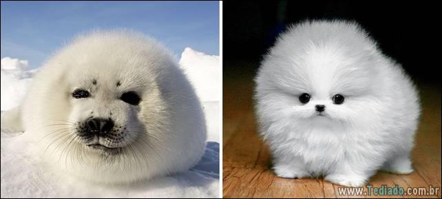 focas-sao-cachorros-oceanos-40