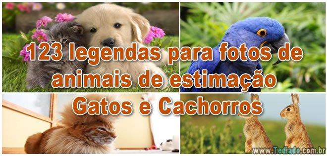 123 legendas para fotos de animais de estimação - Gatos e Cachorros 6