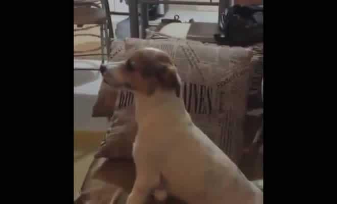 A reação do cão a ver um filme de terror 7