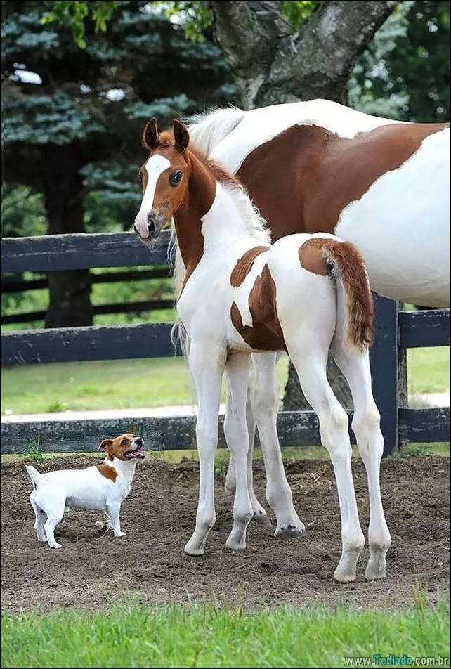 animais-irmao-mae-diferente-03