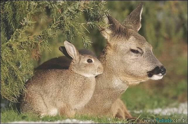 animais-irmao-mae-diferente-04