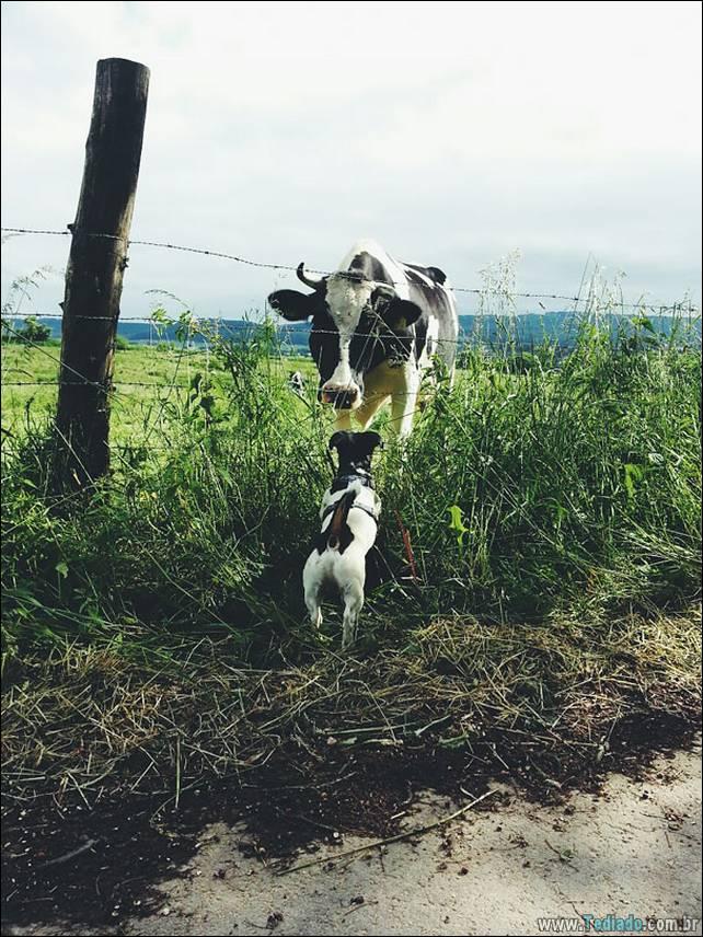 animais-irmao-mae-diferente-05