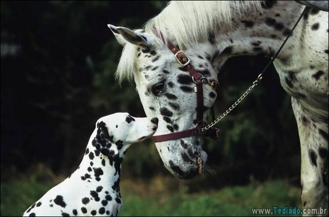 animais-irmao-mae-diferente-13