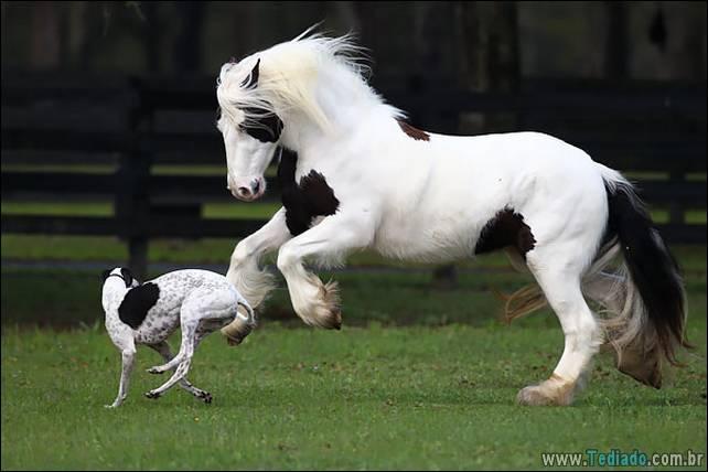 animais-irmao-mae-diferente-15