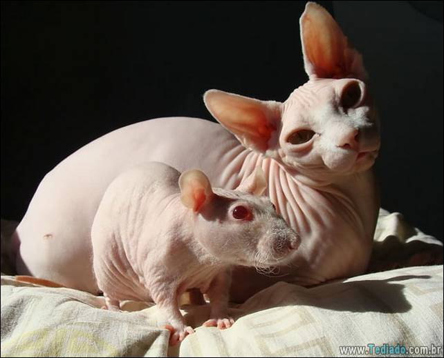 animais-irmao-mae-diferente-16