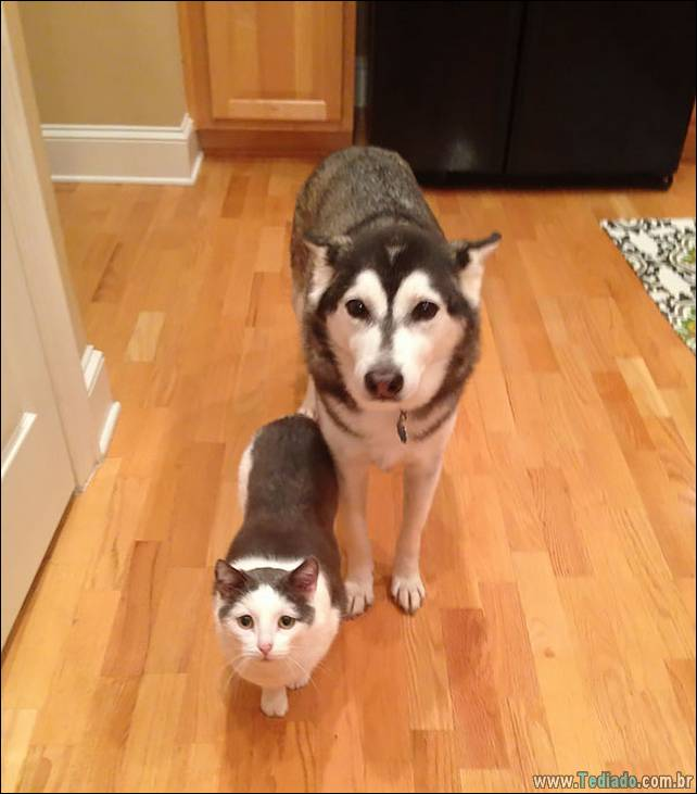 animais-irmao-mae-diferente-17