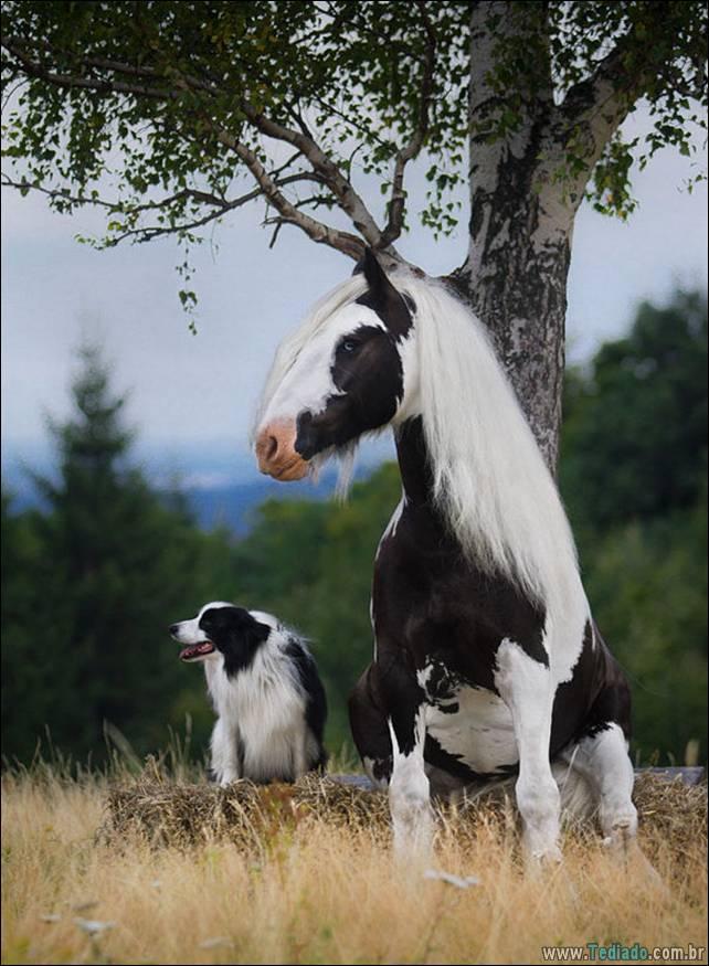 animais-irmao-mae-diferente-26