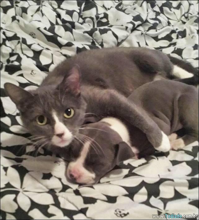 animais-irmao-mae-diferente-27