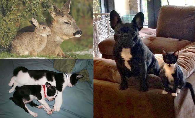 30 animais com irmãos de outras mães 1