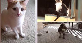 melhores-fails-com-gato