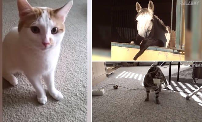 Compilação com os melhores fails com gatos - 2016 5