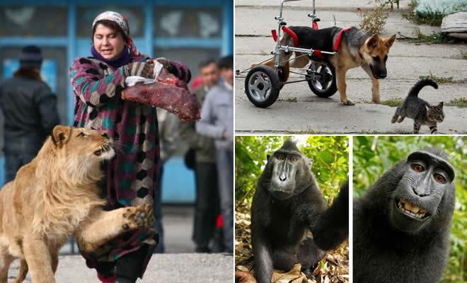 17 melhores fotos de animais que vão fazer você feliz 2