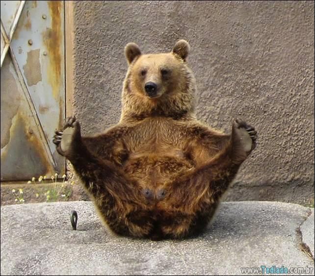 animais-que-faz-yoga-08
