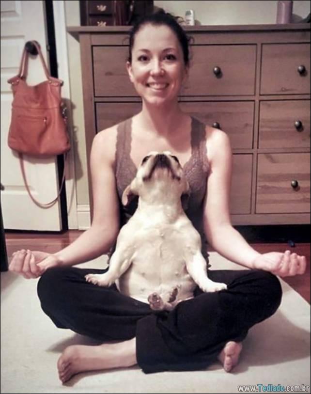 animais-que-faz-yoga-09