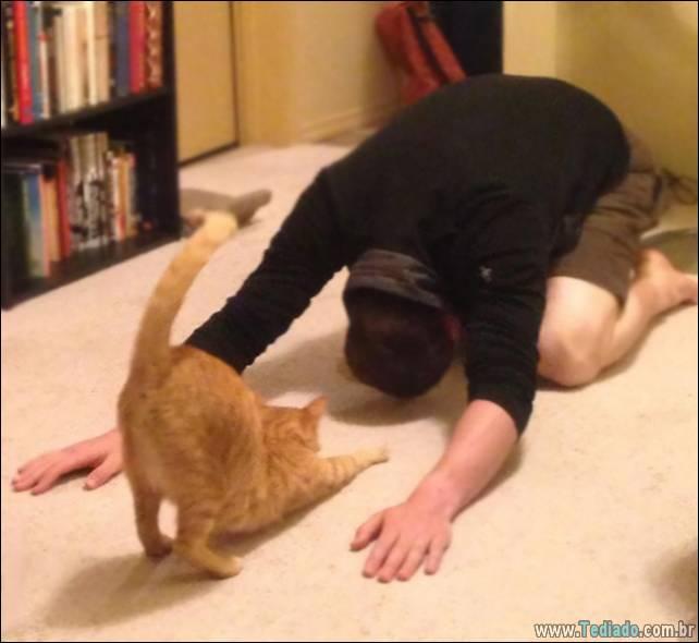 animais-que-faz-yoga-10