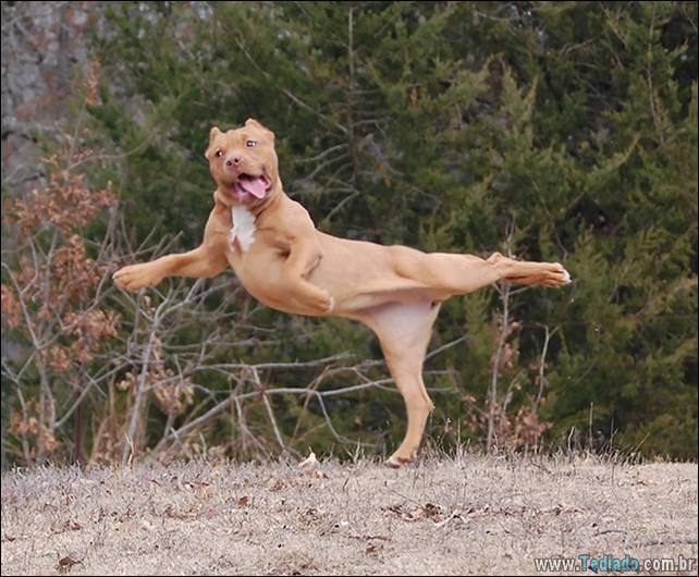 animais-que-faz-yoga-11