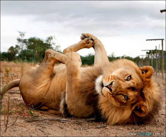animais-que-faz-yoga-14