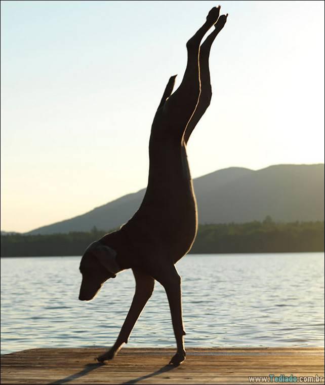 animais-que-faz-yoga-15