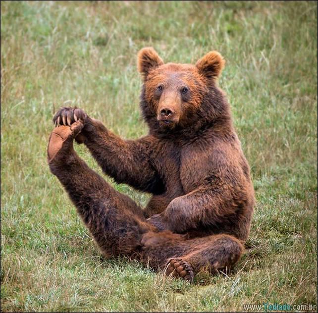 animais-que-faz-yoga-16