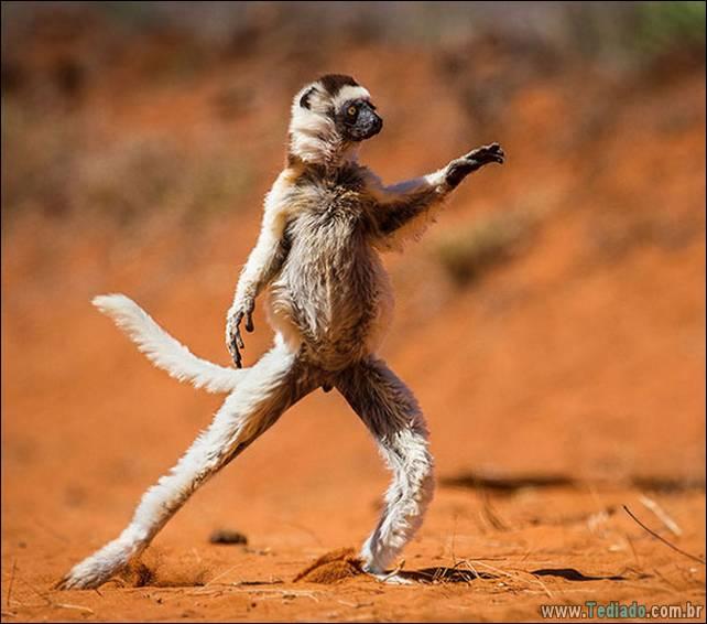 animais-que-faz-yoga-17