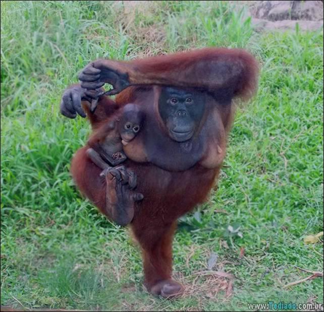 animais-que-faz-yoga-19