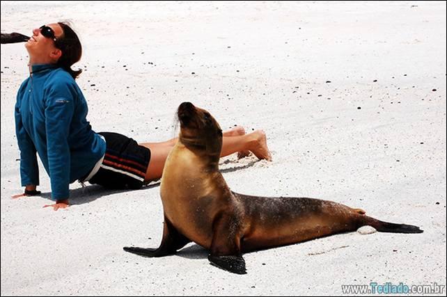 animais-que-faz-yoga-20