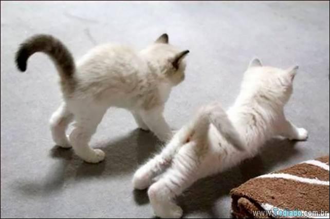 animais-que-faz-yoga-21