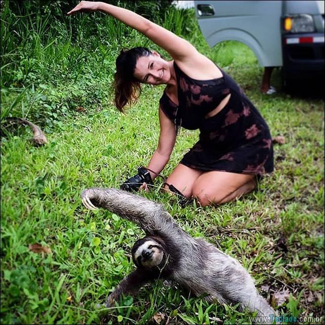 animais-que-faz-yoga-22